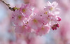 Finally Spring (Mariannevanderwesten) Tags: bloesem voorjaar lente spring pink roze macro nikon bokeh blossom nature natuur