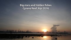 Big stars and hidden fishes on Cyrene Reef (wildsingapore) Tags: cyrene paralichthyidae fish island singapore marine intertidal shore seashore marinelife nature wildlife underwater wildsingapore platycephalidae platycephalus indicus echinodermata protoreaster nodosus asteroidea