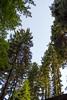 (petrovicka95) Tags: nature trees woods green srbija avala may sky color frame