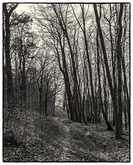 Chemin ombragé (Francis =Photography=) Tags: europe europa france grandest alsace basrhin 67 rosenwiller forêt forest wald chemin path weg trees arbres bäume