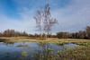 the birch (barfi*) Tags: birch nature reflections