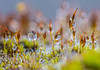 Small and Smaller. (Omygodtom) Tags: macro bokeh tamron90mm tamron d7100 moss water outside asia funny round green