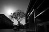 untitled (ChrisRSouthland) Tags: brisbane elmarit28mmf28 leicammonochrom mm places blackwhite blackandwhite contraluz monochrome outdoor tree