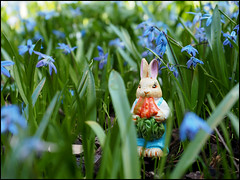 Day 105 (kostolany244) Tags: 3652018 onemonth2018 april day105 1542018 kostolany244 olympusomdem5markii europe germany geo:country=germany month bunny flowers outside 365the2018edition