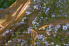Forget me not. (BeeFour1) Tags: art artistic reflections glitter flowers nature fabric meadow