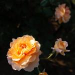 RXV07353 thumbnail