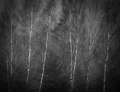 1920p 72dpi b&w-6739 (R W Gibbens Photo) Tags: lunevalley lune lancashire england uk river valley landscape lightroom