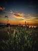 Sunrising (Manos Tzavaras) Tags: landscape samsung smartphone sunrise flowers