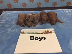 Dakota Boys pic 4 4-8