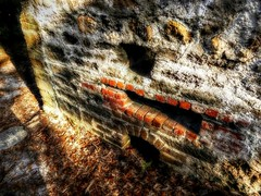 Bricks and Coquina (Chris C. Crowley) Tags: bricksandcoquina wall ruins sugarmillruins sugarmillgardens sunlight bricks stone coquina portorangeflorida