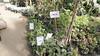 Vegetables at Egypt's Spring Flowers Fair 2018 (Kodak Agfa) Tags: egypt giza gardens springflowersshow spring springflowersshow2018 parks ormanbotanicalgarden mideast africa northafrica mena plants rocca aubergine