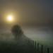 Valado na néboa