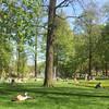 Park - De Boeklezer en De Denker (Karinn) Tags: boek lezen denken spring lente