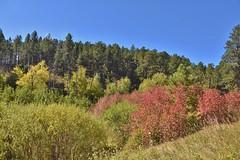 Black Hills color - South Dakota (stevelamb007) Tags: southdakota blackhills colorful heroncreekforestpreserve stevelamb nikon d7200