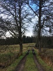 Nymans Ängar Sweden (T Söderlund 1.2M views) Tags: sweden sverige nature natur meadow äng ängar nymans nymansängar sandared grass
