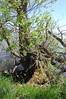 DSC_0026 (Jan van den Berg) Tags: biesbosch