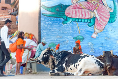 Sacred cows and Saddhus ..Varanasi (geolis06) Tags: geolis06 asia asie inde india uttarpradesh varanasi benares gange ganga ghat inde2017 olympus hindu hindou religieux religious sage sadhu banaras