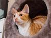 _P1011769_cut (daniel kuhne) Tags: cats katzen cornishrex stubentiger mft epl3