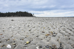 Rathtrevor Beach of Treasures (KCR Natural Wonders Photography) Tags: rathtrevor beach treasures shells sand cloudy early spring low tide nikon d7200 18300mm photography
