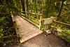 Bon Jovi (sebboh) Tags: carlzeisscontaxg21mmf28biogon serialnumber8011695 sonya7kolariut zeissrokkorfrankenlens bridge forestpark portland oregon pdx forest trees