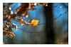 Vertrocknet (günter mengedoth) Tags: meyeroptik görlitz orestor 135 mm f 28 meyeroptikgörlitzorestor135mmf28 laub vertrocknet sonnenstrahl licht hell bokeh vintage historisch altglas saariysqualitypictures pentaxflickraward