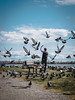 Pigeon Master (little_stephy0925) Tags: pigeons bird taichi taichimaster practice healthy stayactive richmond bc britishcolumbia canada vancouver fujifilm fuji fujifilmxh1 xh1 fujixh1 fujinonxf1655mm xf1655mm mirrorlesscamera classicchrome capturethemoment streetphotography steveston dailyhivevan