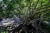 Anping Tree House (安平樹屋) (YY) Tags: tainan anping anpingtreehouse 安平樹屋 台南 安平 台灣 taiwan banyantree trees roof house