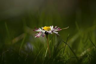 Full in the spring ,,,.