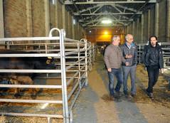 7è Concurs nacional de mascles de la raça bruna d'Andorra.12-04-2018 (Govern d'Andorra) Tags: ramaders agricultura mediambient calvó raçabruna tabac