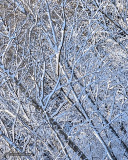 Spring Snowfall_08_DSC_1464_WM