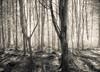 Trees April 2018 (kckelleher11) Tags: 1445mm 2018 april bw black ep2 ir infrared olympus trees white light panasonic tree