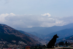 Thimphu's Guardian. (A. adnan) Tags: frames bangladeshi bhutan travel dog landscape cityscape sky cloud animal street holiday vacation