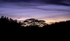 DSC01213 (xubo2) Tags: a7iii sunset portrait