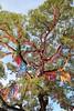 Tree of Prayers (Jane Inman Stormer) Tags: tree temple buddhism buddhist seoul southkorea color bright lanterns
