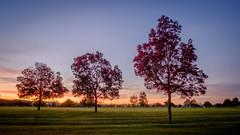 Autumn sunset (lizcaldwell72) Tags: trees sky hawkesbay newzealand sunset napier light