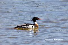 IMG_4830 (nitinpatel2) Tags: bird nature nitinpatel