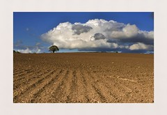 Barren (hall1705) Tags: barren landscape cropsnclouds field clouds nikon1j5 nature farming westsussex outdoor trees
