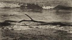 Varada en la playa II (candi...) Tags: rama playa agua arena olas airelibre naturaleza nature sonya77
