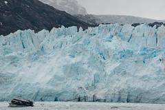 MS Westerdam - 7 Day Alaska May 2018 - Glacier Bay-200.jpg (Cindy Andrie) Tags: alaska hollandamerica d800 nature britishcolumbia beach victoriabc westerdam glacierbay landscape nikon cindyandrie canada andrie glaciers nikond800 cindy
