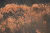 Dirty Rubber 2 (gripspix (OFF)) Tags: 20180308 schrottplatz scrapheap junkyard fundstücke found details conveyorbelt förderband ausgemustert decomissioned dirty dreckig texture textur rubber gummi