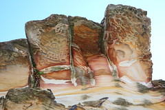 Hawkesbury sandstone (Poytr) Tags: hawkesburysandstone fern cyrtomiumfalcatum sydneyaustralia nsw australia rock triassic harbord harbordnsw sandstone japanesehollyfern hollyfern sky cyrtomium dryopteridaceae weed freshwaternsw
