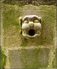 Mossy waterspout (catb -) Tags: france lumix vannes building architecture drain waterspout face cathedral brittany spout gargoyle