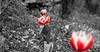tulipanes (www.infografiagijon.es) Tags: wwwinfografiagijones infografia gijon astur asturias asturies xixon hernancad canon eos5d markii flores flowers rosas rose red nature naturaleza