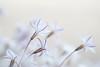 underworld (christophe.laigle) Tags: christophelaigle fleur macro nature flower fuji blanche blanc xpro2 xf60mm white