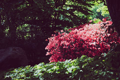Rhododendron Park Bremen (LucasRebmannPhotography) Tags: lens xf bremen germany fujifilm deutschland sky bokeh house haus kirche street photography boat water fuji classic chrome raw iso bird animal cold 2018 2017 lines wall architecture park tree baum lucas rebmann wood forest lake river xt20 x t 20 1855mm hoya filter building city grass rhododendron cloudy sun flowers field foliage bürgerpark kit sonne light beam focus flag nice birdhouse blume niedersachsen reflection sea special lightroom