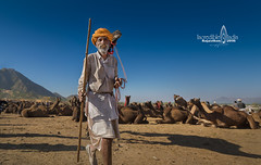 camel fair, rajasthan (Albert Photo) Tags: oldman nomads herdsmen camelfair rajasthan india asia nomadic sky animal