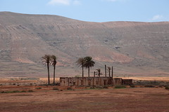 palm lodge (Rasande Tyskar) Tags: fuerteventura canaryislands canarias canary kanaren islands countryside landschaft landscape building house abandoned verlassen haus ruin empty palmen palm trees oasis oase