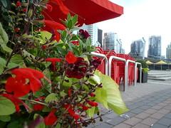 Happy Thursday Floral (Mr. Happy Face - Peace :)) Tags: thursdayfloral theme westvan vancouver port art2018 flower skyline bc canada britishcolumbia thursdayflower red patio