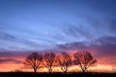Happy Family Day Sunrise (NathalieSt) Tags: camargue europe france gard languedocroussillon leverdesoleil nikon nikond5500 nikonpassion nikonphotography sunrise