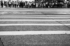 Zebra (gergelytakacs) Tags: asia china chinese eastasia fareast hk hongkong hongkonger pearlriverestuary sar bw black blackandwhite bystander calle candid city cross crossing crosswalk crowd dark documentary evening flâneur harbor horizontal legs line lines monochrome night pedestrian people photo photography port public rue space strada stranger strasenfotografie street streetphotographer streetphotography streetphotgrapher streetphotgraphy streetphoto streets streetscape stripes traffic ulica unposed urban urbanphoto urbanphotographer urbanphotography utcafotó waiting walk walker walking white zebra улица רחוב 香港